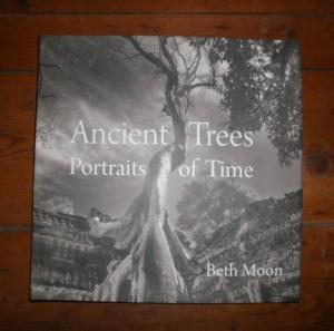 Lani Longshore Ancient Trees