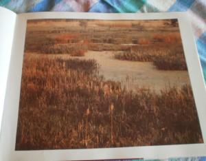 Lani Longshore swamp picture