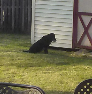 Abby, waiting for the cute bunnies to come out and play