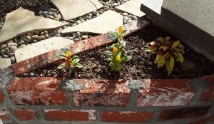 Lani Longshore planting box