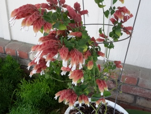 The shrimp plant