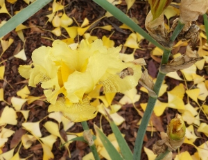 Lani Longshore gingko leaves and iris